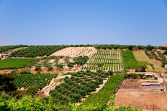 Wine and Olive field Stock Photos