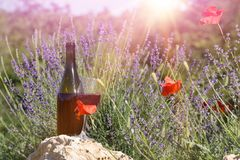 Wine over lavender field. Red wine bottle and wine glass on the ground. Bottle of wine against lavender landscape. Sunset over a summer lavender field in Stock Photos