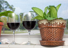 Wine and plant Royalty Free Stock Photos