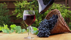 Wine is poured into a glass carafe. On a background of a basket of ripe grapes