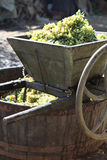 Wine press. Making wine in the traditional way Royalty Free Stock Images