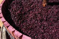 Wine press with red grape pomace Stock Photos
