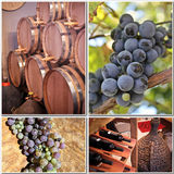 Wine production  Royalty Free Stock Images
