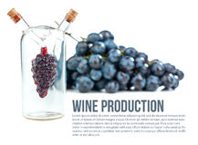 Wine production. Bunch of grapes and a flask of wine on a white background stock images