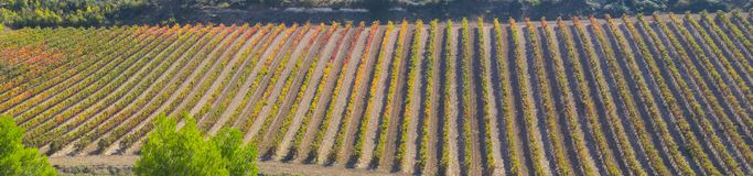 Wine production, camino de Santiago. Royalty Free Stock Photography