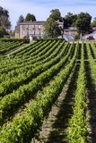 Wine Production - Vineyard in the Dordogne - France stock photos