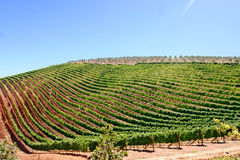 Wine ranks. Outside Cape-Town in South Africa Stock Photo