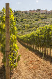 Wine ranks in Tuscany. Wine ranks in the mountains of Tuscany in Italy with a small village at a mountain on the background Stock Photography