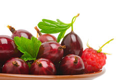 Wine red gooseberry and the raspberry Stock Images