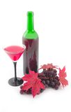 Wine and red maple leaves. With grapes on white background Royalty Free Stock Image