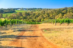 Wine Region Australia. Australian vineyard. Country road in Vineyard with rows of white grapes. Wilyabrup in Margaret River known as the wine region in Western stock photos