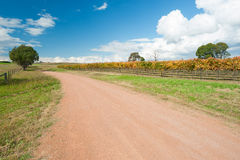 WIne Region near Canberra, Australia Royalty Free Stock Photo