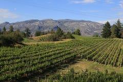 Wine Resort-vineyard stock images