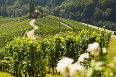 Wine road in a shape of a heart, Maribor, Slovenia Royalty Free Stock Photo