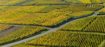Wine Road, Vineyards of Alsace in France Stock Photos