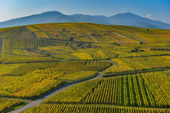 Wine Road, Vineyards of Alsace in France Royalty Free Stock Image