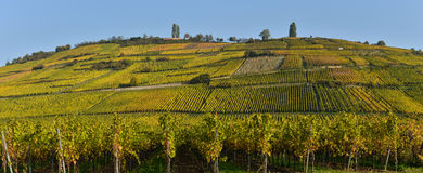 Wine Road, Vineyards of Alsace in France Stock Photography