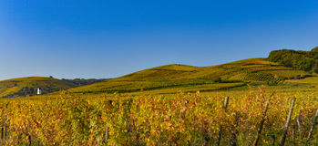 Wine Road, Vineyards of Alsace in France Royalty Free Stock Photo