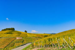 Wine Road, Vineyards of Alsace in France Royalty Free Stock Images