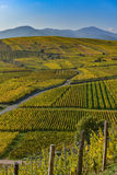 Wine Road, Vineyards of Alsace in France Royalty Free Stock Photography