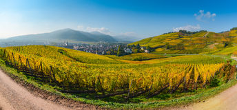 Wine Road, Vineyards of Alsace in France Stock Images