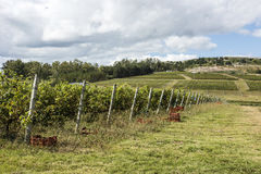 The Wine Roads Los Caminos del Vino of Uruguay. Scenic vineyard located near Punta Del Este, part of The Wine Roads Los Caminos del Vino of Uruguay Royalty Free Stock Photos