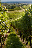 Wine route in Alsace Stock Photos