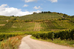 Wine route in Alsace Royalty Free Stock Image