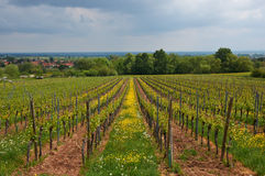 Wine Route in Alsace. Views of the vineyards. Royalty Free Stock Image