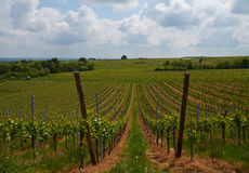Wine Route in Alsace. Views of the vineyards. Royalty Free Stock Photo