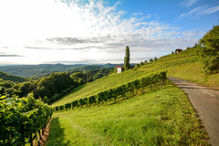 Wine route through steep vineyard next to a winery in the tuscany wine growing area, Italy Royalty Free Stock Images
