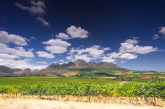 Wine route, stellenbosch, South Africa. Vineyard in the hills around Cape Town, Stellenbosch, South Africa stock photography