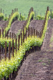 Wine sea have green waves. Colors of spring vineyard near casteggio oltrepo pavese pavia italy Stock Photos