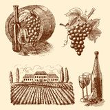 Wine sketch decorative set Stock Photos
