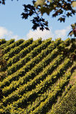 Wine slope Royalty Free Stock Image