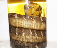 Wine and snake Stock Photography
