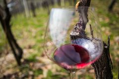 Glass in wineyard Royalty Free Stock Images