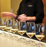 Wine tasting glasses. Row of white wine glasses in winery tasting event Royalty Free Stock Photo