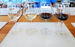 Wine tasting glasses with different wine for tasting, Chile. Wine tasting glasses with different wine for tasting, near Santiago, Chile Stock Photo