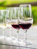 Wine tasting in Stellenbosch Stock Photos