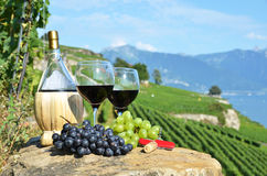 Wine on the terrace vineyard Stock Photography