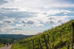 Wine Tour in Uhlbach near Stuttgart, Germany Royalty Free Stock Image