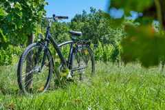 Wine Tourism-Bicycle in Bordeaux vineyards Royalty Free Stock Photography