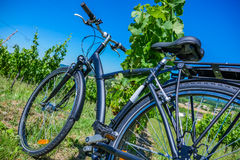Wine Tourism-Bicycle in Bordeaux vineyards Stock Photo