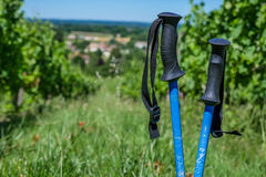 Wine Tourism-Pair of hiking shoes in the grass surrounded vineya Stock Image