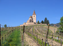 Wine trail french vineyard old church alsace france. Blue summer sky over old church in rural alsace lorraine france on the wine trail with grapes growing in the stock images