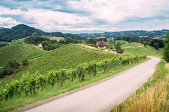 Wine Trail in Southern Styria Royalty Free Stock Photo