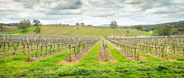 Wine valley in Adelaide Hills. Picturesque autumn wine valley in Adelaide Hills region, South Australia stock images