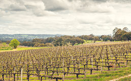 Wine valley in Adelaide Hills. Picturesque autumn wine valley in Adelaide Hills region, South Australia royalty free stock images