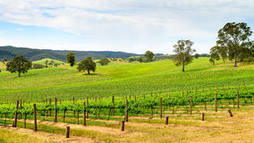 Wine valley in Barossa Stock Photography